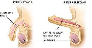 stoporenie penisu